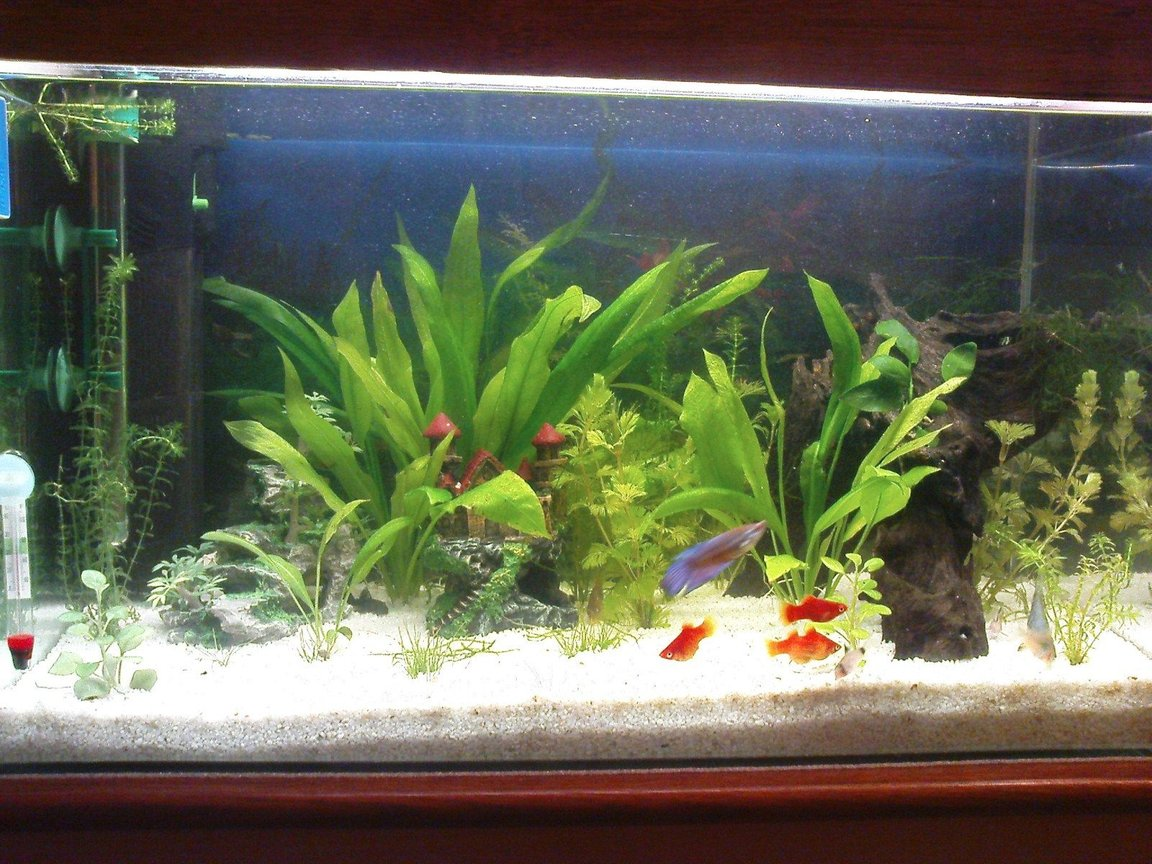 10 gallons freshwater fish tank (mostly fish and non-living decorations) - fish tank...mine!