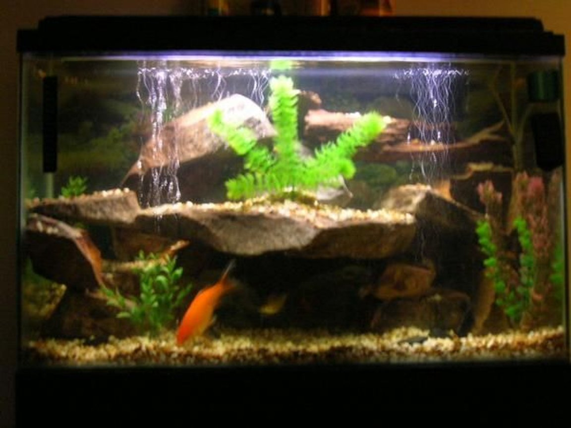 40 gallons freshwater fish tank (mostly fish and non-living decorations) - 40 gal fresh water