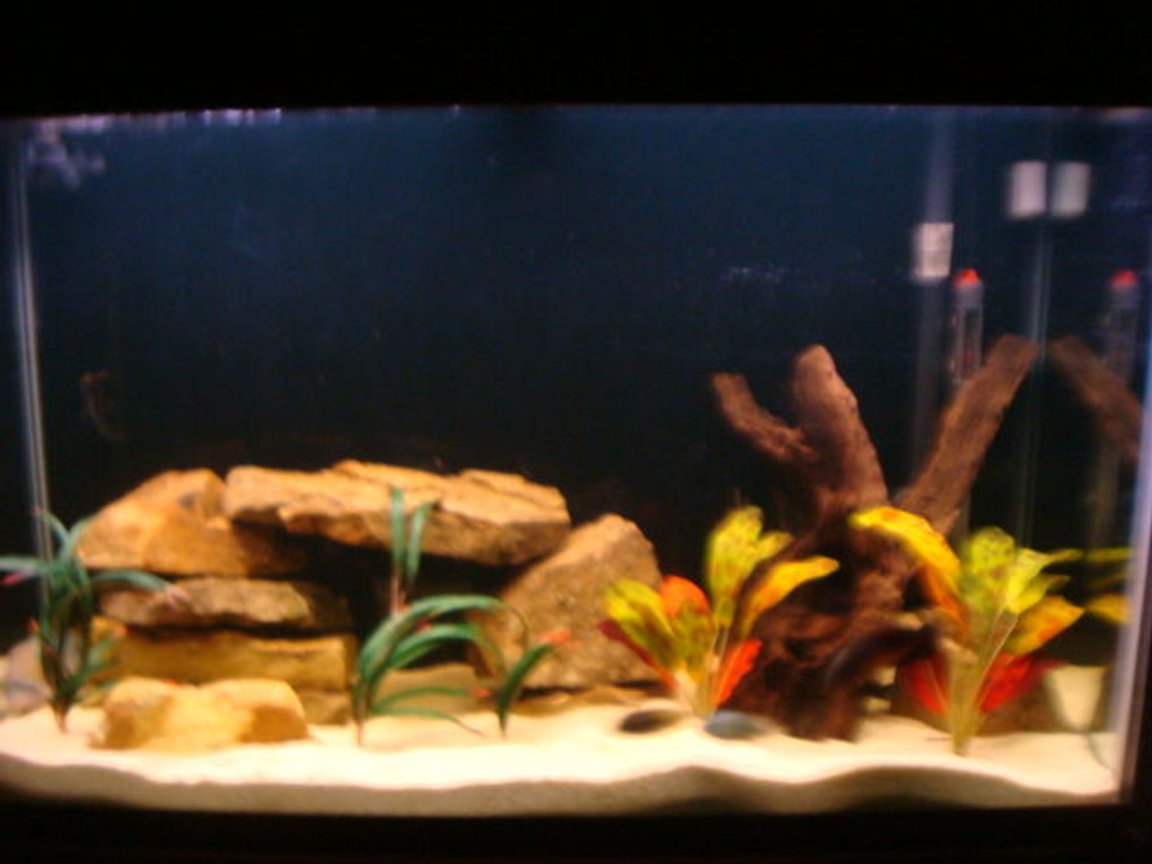110 gallons freshwater fish tank (mostly fish and non-living decorations) - 110 gallon tank. Red Oscar, Electric Blue Jack Dempsey, Green Terror, Texas Cichlid.... Ozelot swords, Dragon Flames, Sand Stone, Maylasian Drift Wood, Pool Filter Sand...