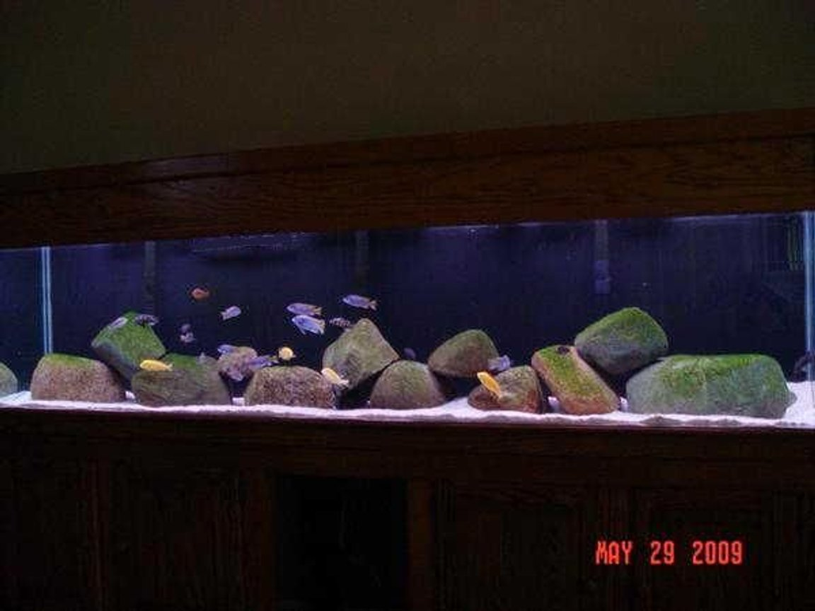 180 gallons freshwater fish tank (mostly fish and non-living decorations) - My 180 Gallon tank