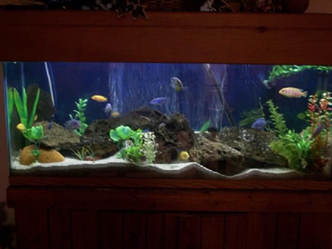 75 gallons freshwater fish tank (mostly fish and non-living decorations) - 70 gallon Cichlid Tank