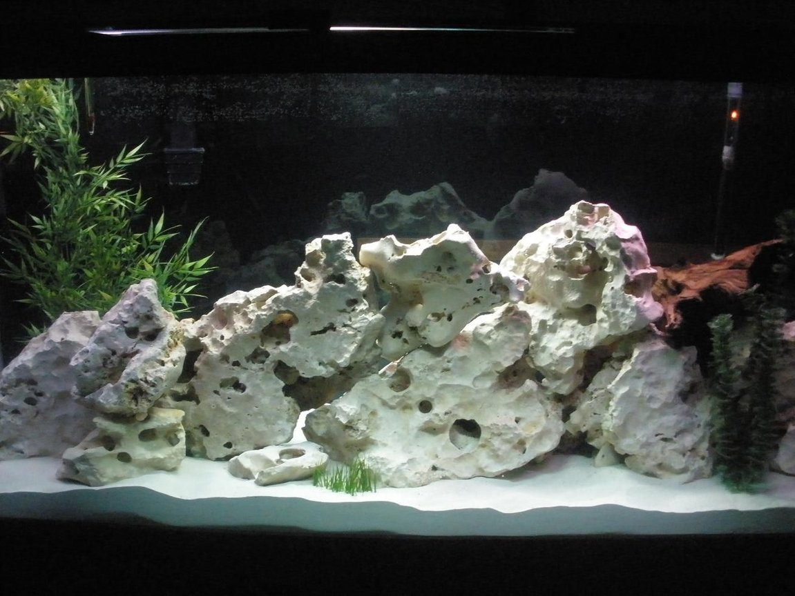 160 gallons freshwater fish tank (mostly fish and non-living decorations) - Our new 160 gallon African tank....