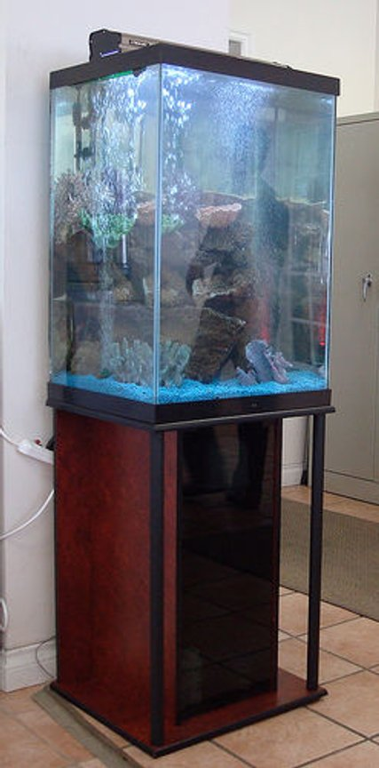 47 gallons freshwater fish tank (mostly fish and non-living decorations) - none