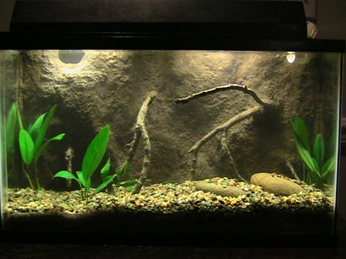 30 gallons freshwater fish tank (mostly fish and non-living decorations) - this is my 2nd 10gal tank which I had made a 3D background