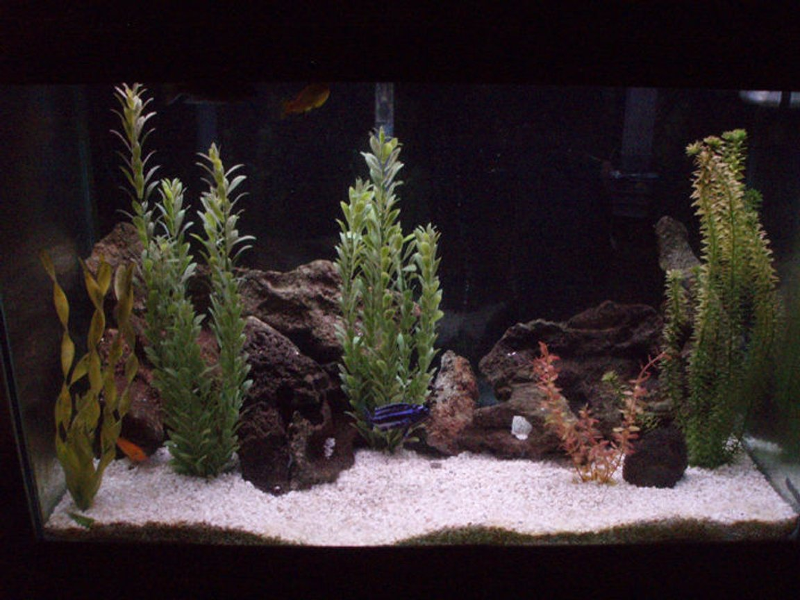 65 gallons freshwater fish tank (mostly fish and non-living decorations) - Malawi Tank.