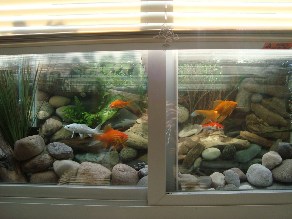 30 gallons freshwater fish tank (mostly fish and non-living decorations) - Gold fish tank viewable in the window if the blinds are pulled up.The background is made with real river rocks arranged behind the tank.The gravel is collected from river.The plants are real plants placed behind the aquarium.