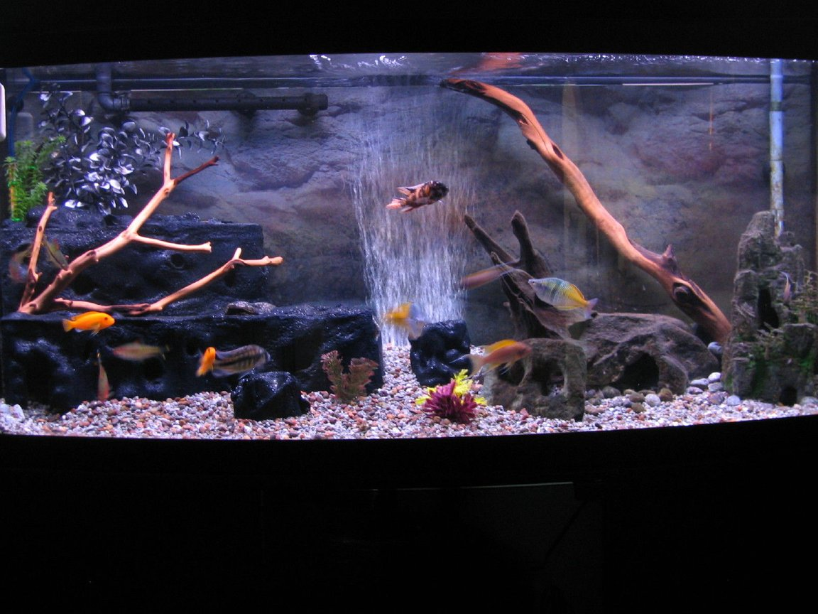 72 gallons freshwater fish tank (mostly fish and non-living decorations) - 72 Bow Front Tank Redone August 30-09
