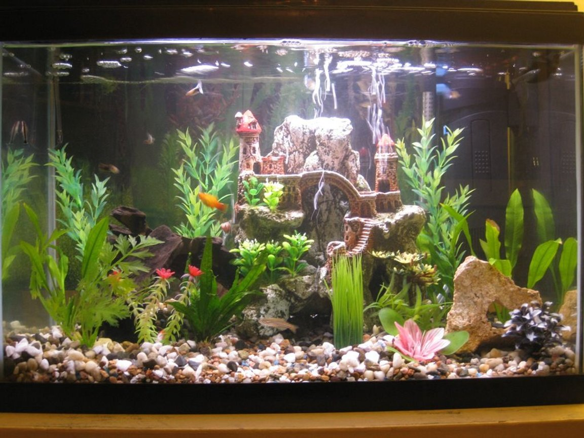 20 gallons freshwater fish tank (mostly fish and non-living decorations) - A picture of my ballin 20 gallon tall planted tank with assorted non-living decorations.