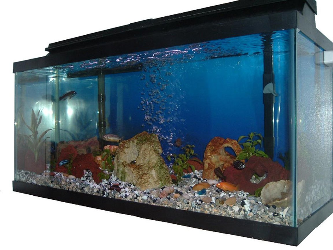 30 gallons freshwater fish tank (mostly fish and non-living decorations) - Side profile of 30g