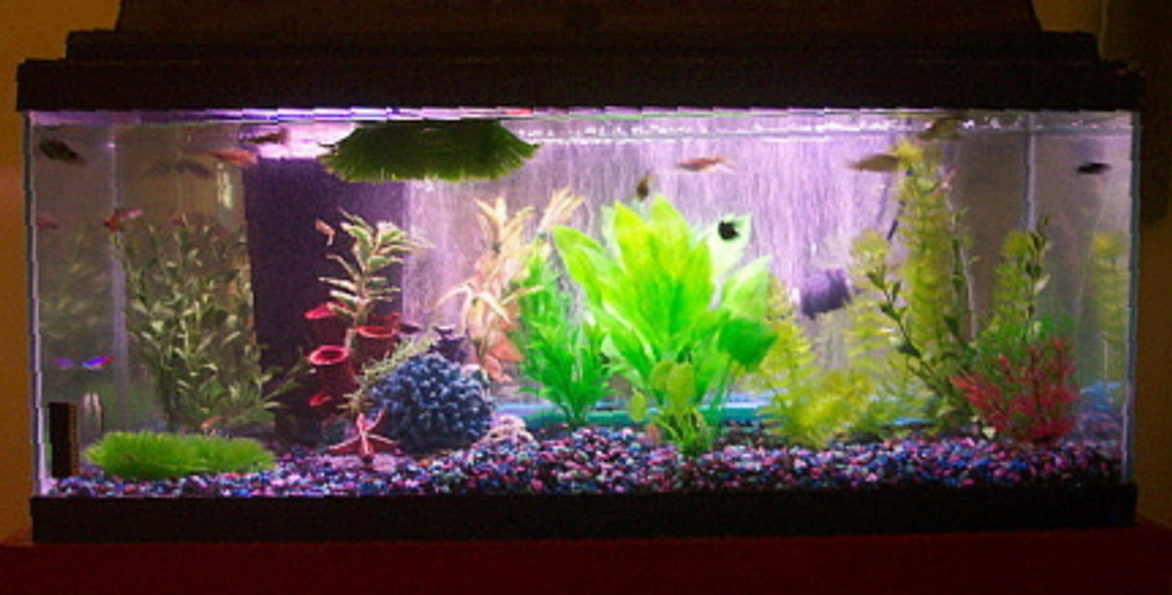 freshwater fish tank (mostly fish and non-living decorations) - 20g long tank