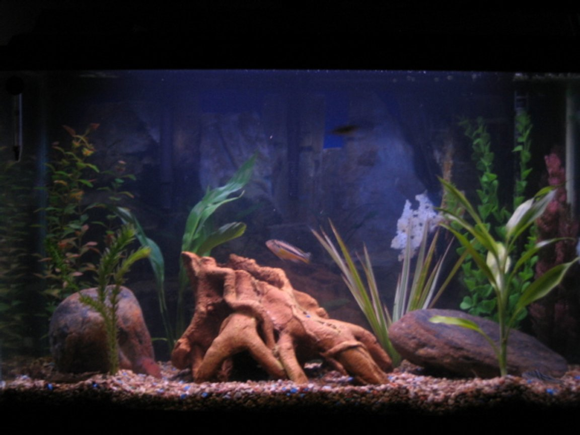 30 gallons freshwater fish tank (mostly fish and non-living decorations) - This is my new setup to me its more of a african lake type setup. Looks cool.