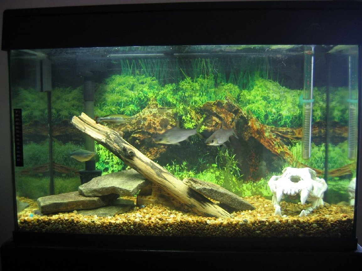 29 gallons freshwater fish tank (mostly fish and non-living decorations) - my 29 gallon eclipse