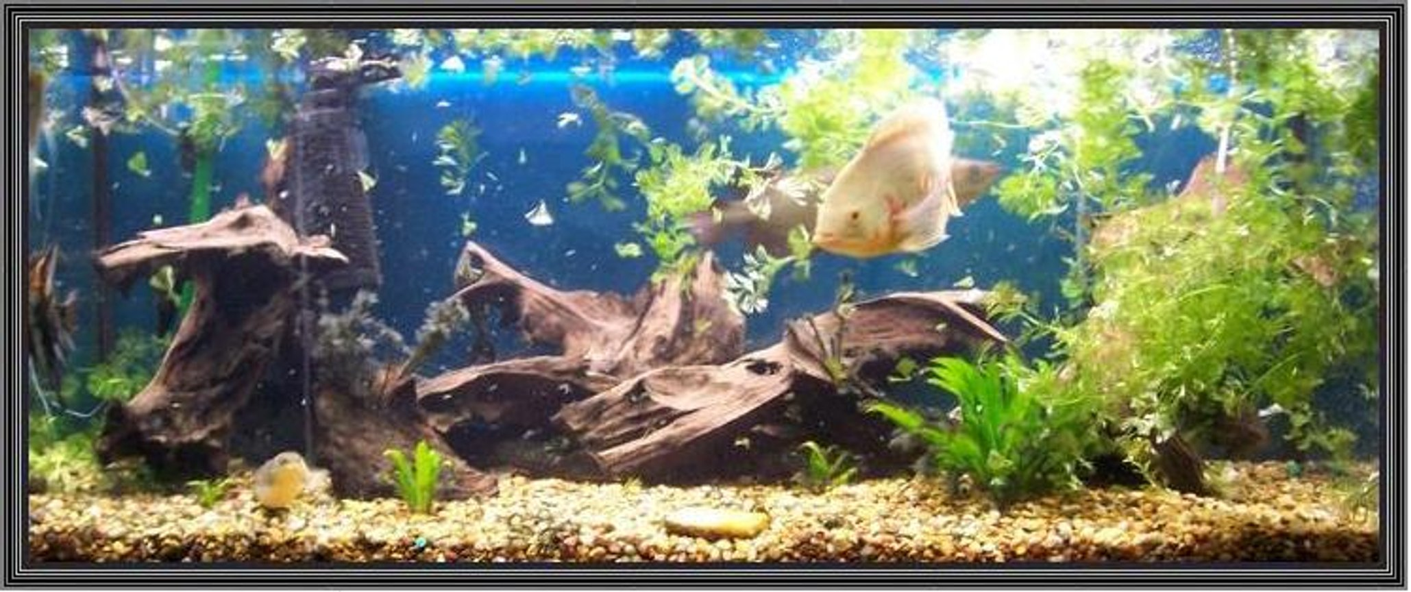 120 gallons freshwater fish tank (mostly fish and non-living decorations) - 75g