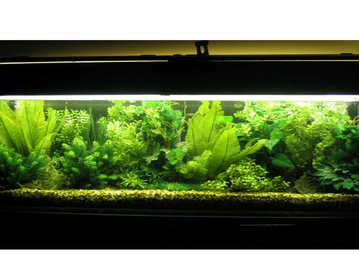 52 gallons freshwater fish tank (mostly fish and non-living decorations) - fully planted tank all plastic plants