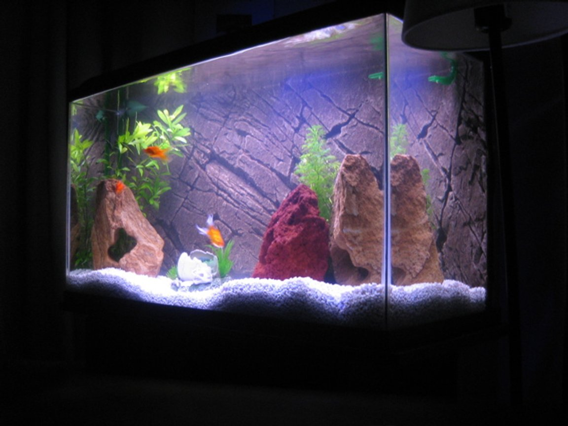 30 gallons freshwater fish tank (mostly fish and non-living decorations) - This is my first freshwater tank. 30 gal. Eheim Classic filter, Pangea Background insert, Power-Glo florescent, Moonglow LEDs, white gravel.