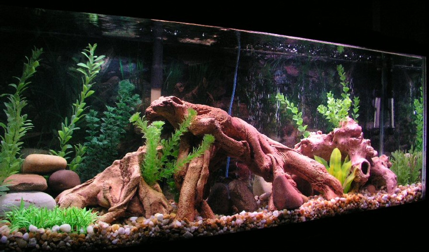 55 gallons freshwater fish tank (mostly fish and non-living decorations) - This is my recent tank for a tropical community built around gouramis.
