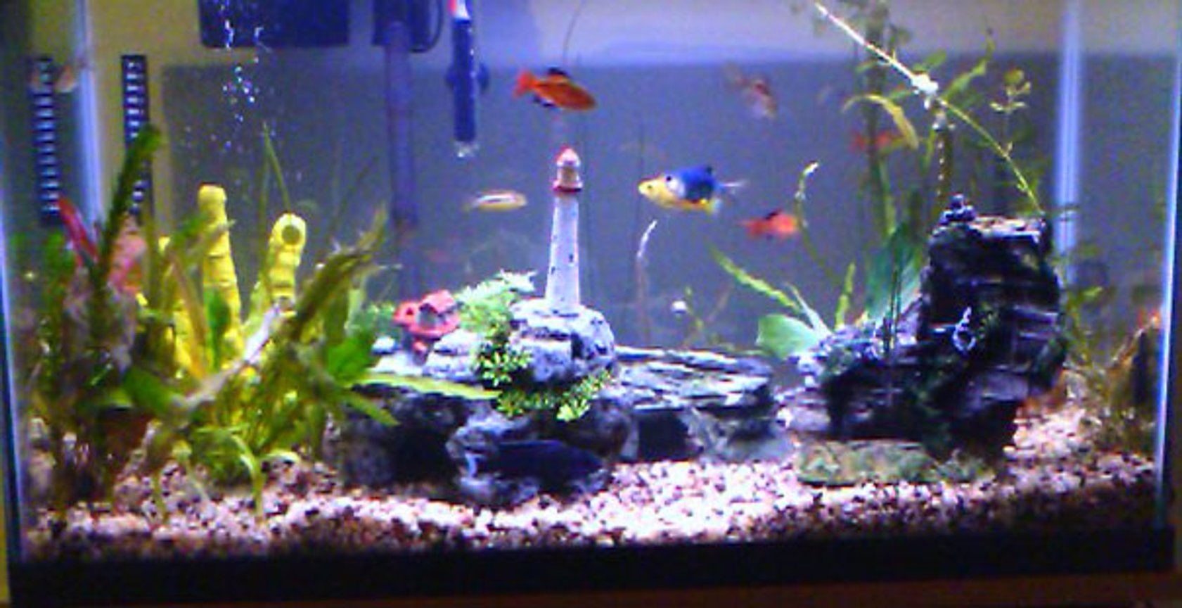 29 gallons freshwater fish tank (mostly fish and non-living decorations) - You can see it, no need to describe it.
