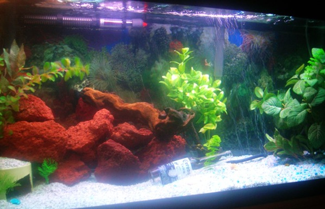 90 gallons freshwater fish tank (mostly fish and non-living decorations) - 90 gallons