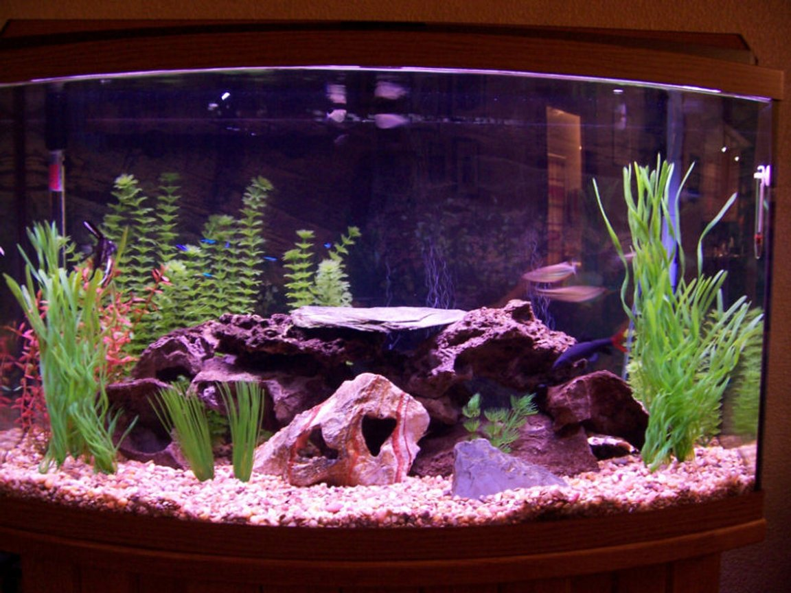 46 gallons freshwater fish tank (mostly fish and non-living decorations) - here it is!