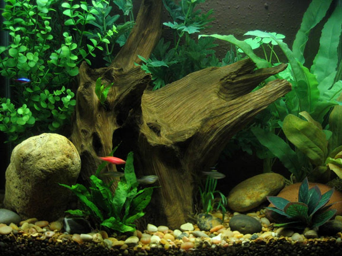 15 gallons freshwater fish tank (mostly fish and non-living decorations) - 15 Gallon