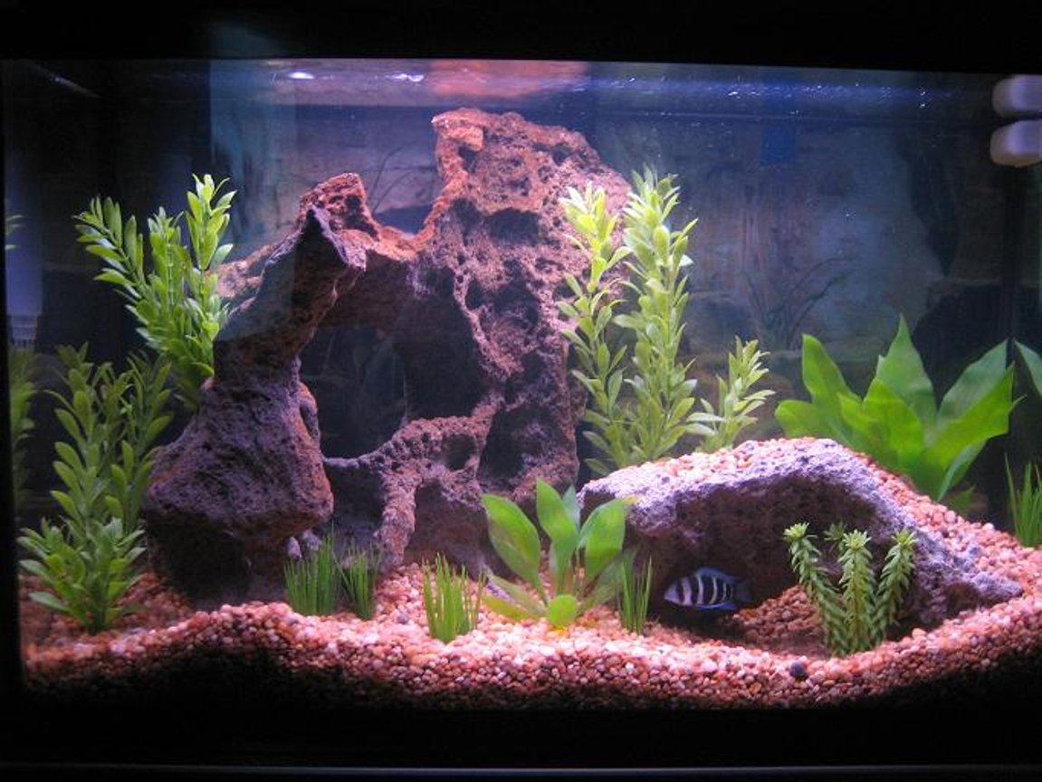 30 gallons freshwater fish tank (mostly fish and non-living decorations) - 30 Gallon Front View (5-11-06)