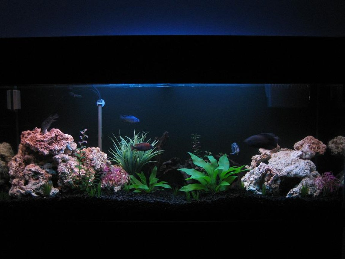 30 gallons freshwater fish tank (mostly fish and non-living decorations) - 125 Gallon Front View (5-14-06)