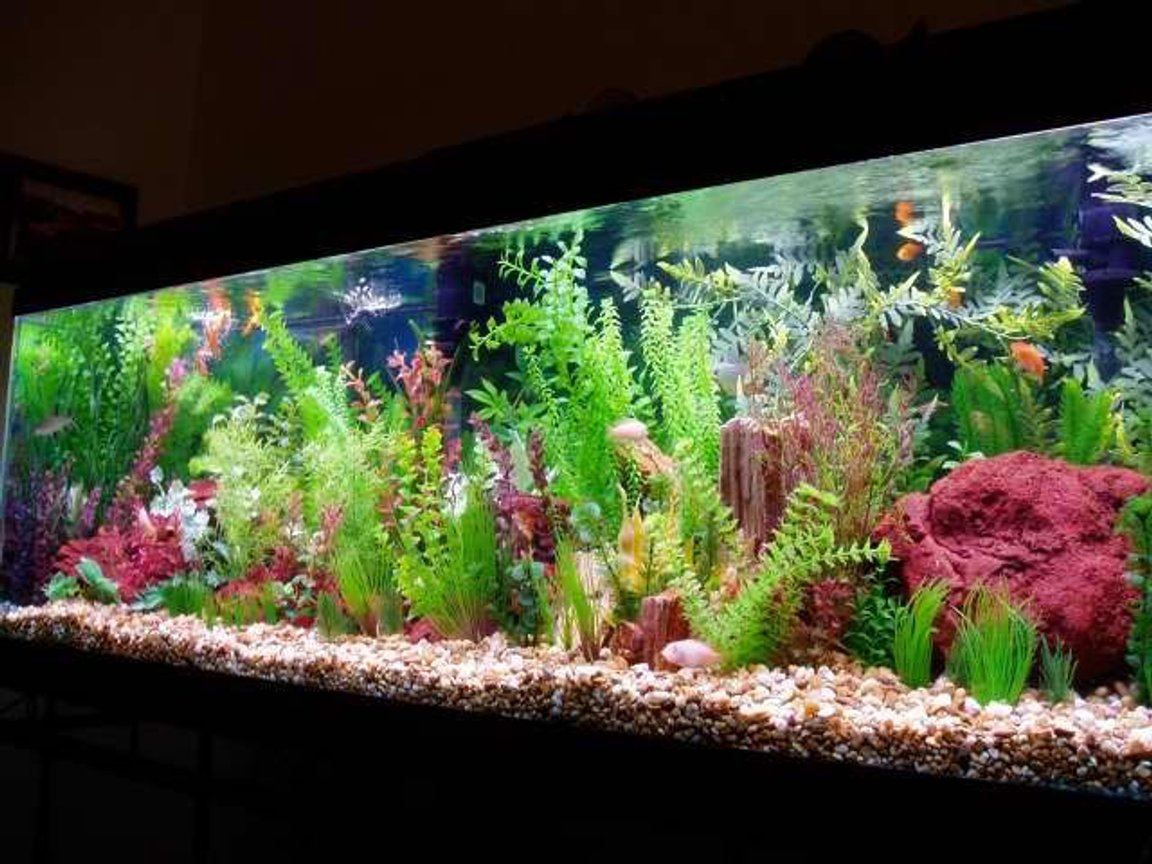 126 gallons freshwater fish tank (mostly fish and non-living decorations) - 126 gallon