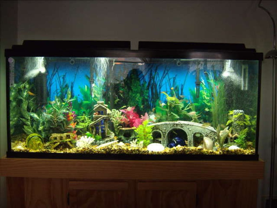 55 gallons freshwater fish tank (mostly fish and non-living decorations) - 55 gallon Tetra Tank