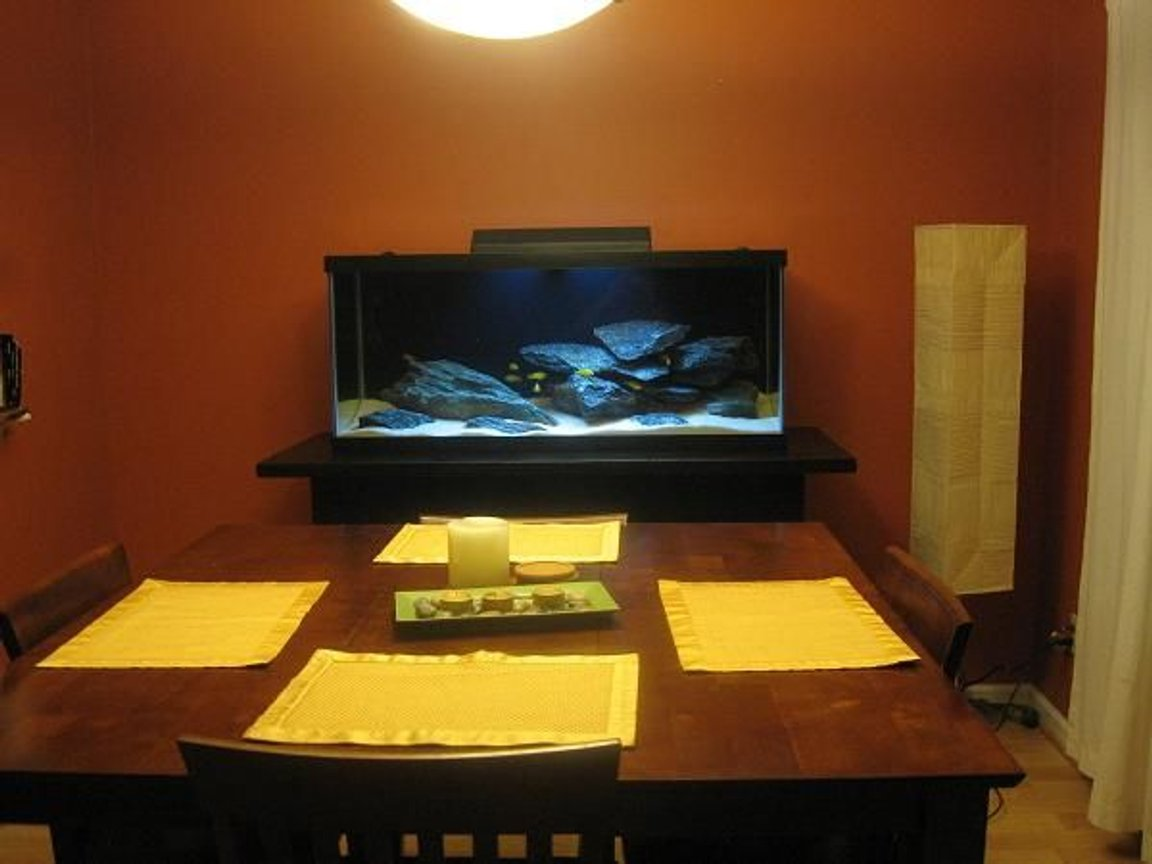 75 gallons freshwater fish tank (mostly fish and non-living decorations) - dining room entertainment
