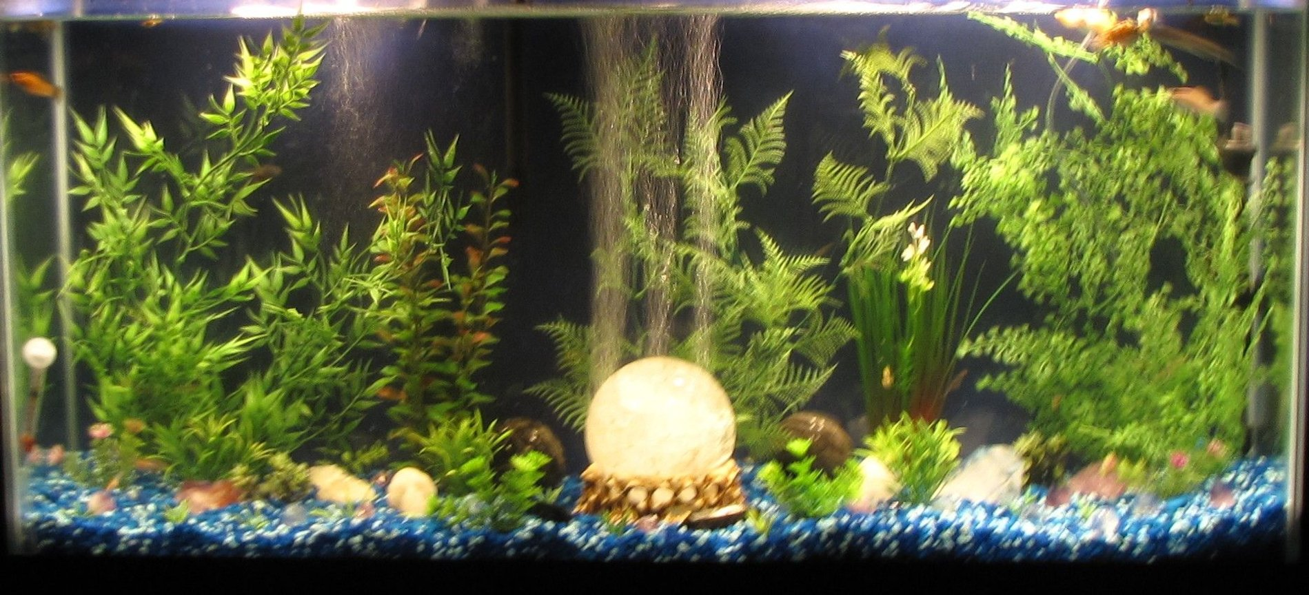 48 gallons freshwater fish tank (mostly fish and non-living decorations) - 48 gal Freshwater Aquarium