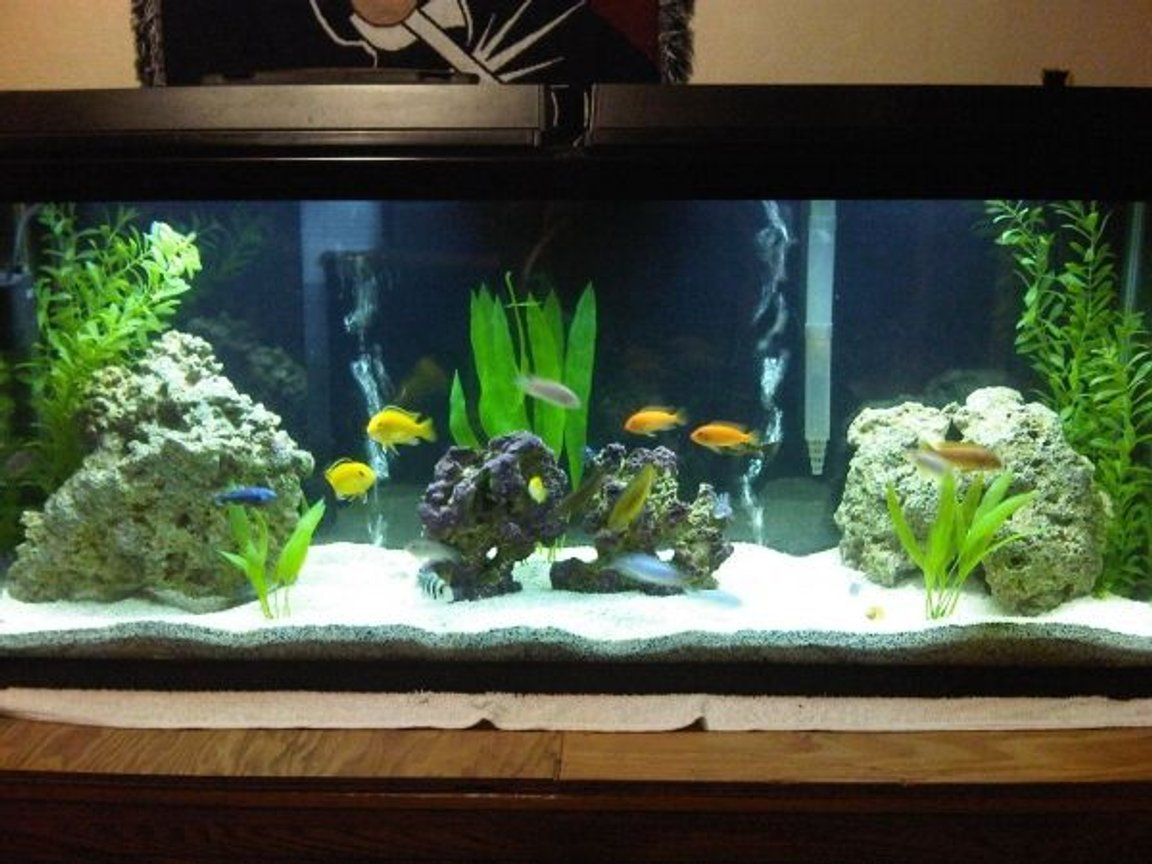 55 gallons freshwater fish tank (mostly fish and non-living decorations) - A work in progress