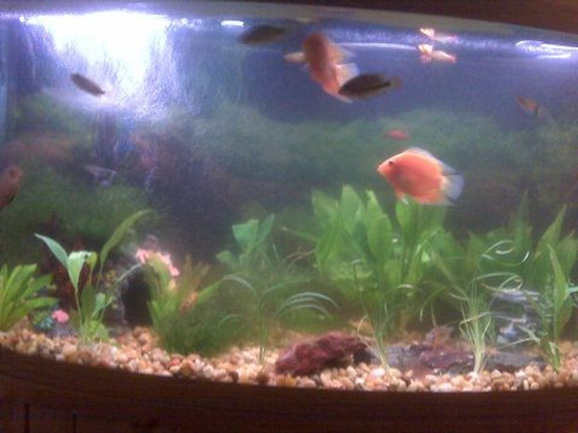 46 gallons freshwater fish tank (mostly fish and non-living decorations) - whole tank as of nov 14 2009
