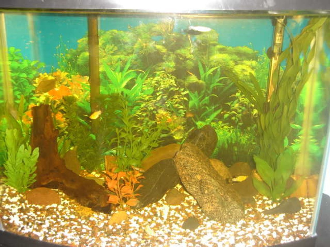 45 gallons freshwater fish tank (mostly fish and non-living decorations) - My fish tank