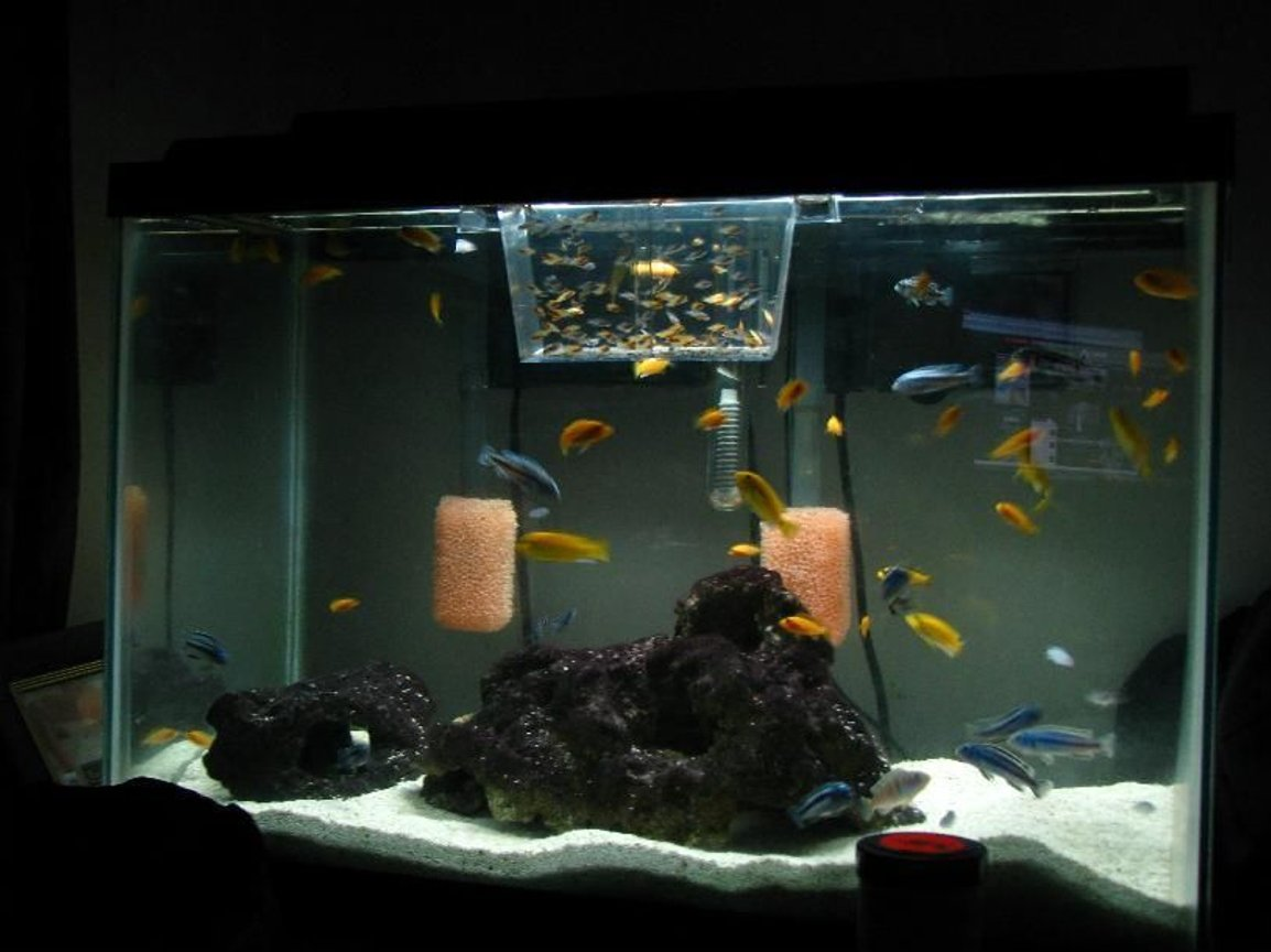 90 gallons freshwater fish tank (mostly fish and non-living decorations) - Baby tank, more on the way