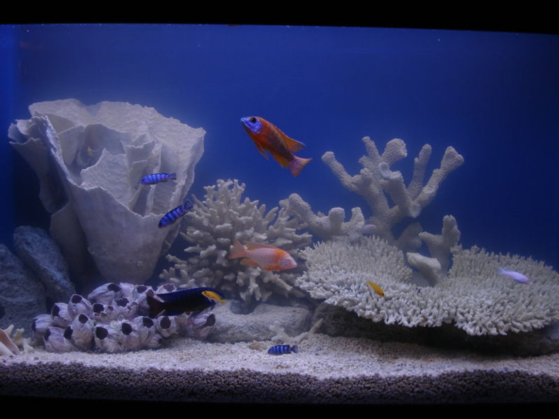90 gallons freshwater fish tank (mostly fish and non-living decorations) - Whuddya think?