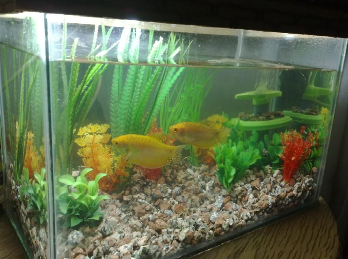 6 gallons freshwater fish tank (mostly fish and non-living decorations) - another view