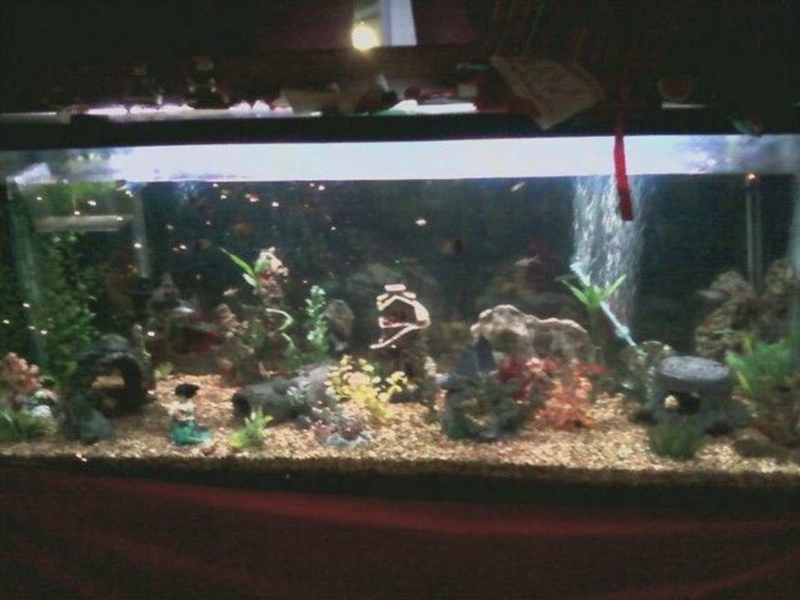 75 gallons freshwater fish tank (mostly fish and non-living decorations) - my 125G community tank, guppies, danios (lepord and zebra), swordtails, dojo loach, tiger barbs, scissortails, striped tetras, serpe tetras, chinese algea eaters, and others