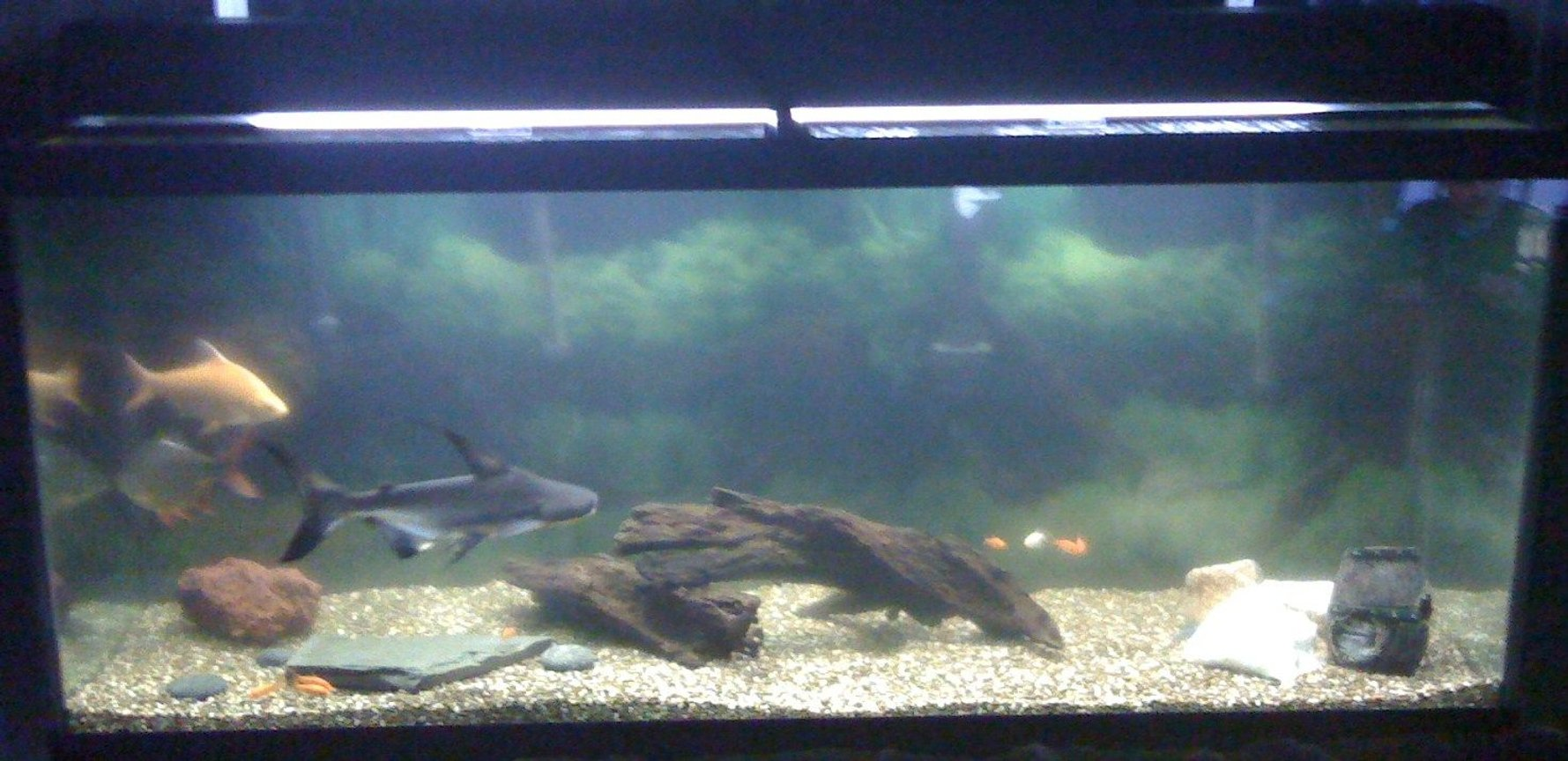 120 gallons freshwater fish tank (mostly fish and non-living decorations) - Not a great picture