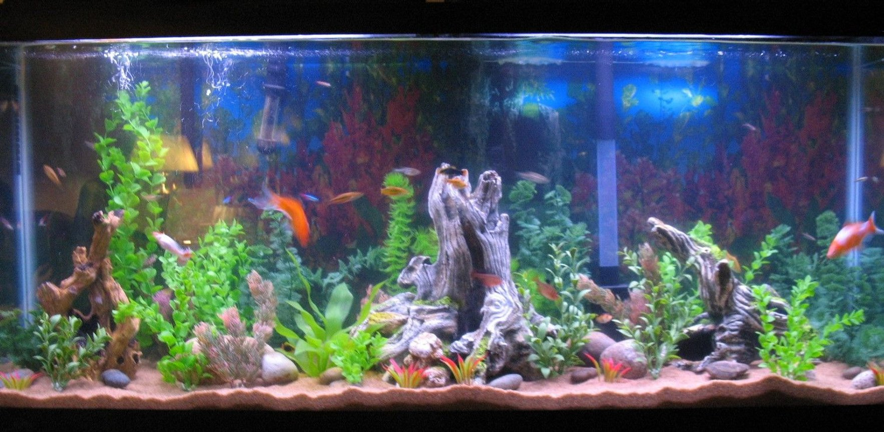 55 gallons freshwater fish tank (mostly fish and non-living decorations) - trying o get a full shot of the tank in.