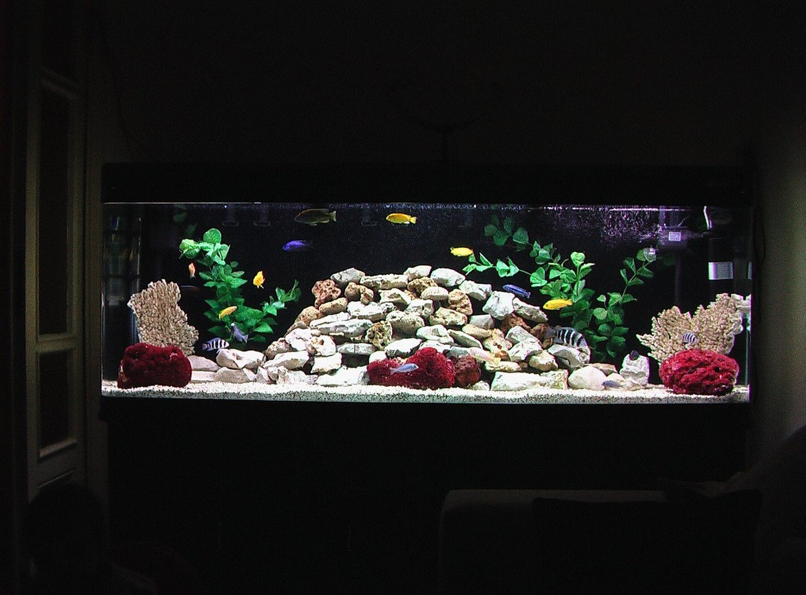 100 gallons freshwater fish tank (mostly fish and non-living decorations) - New rock design for my African Cichlid tank.