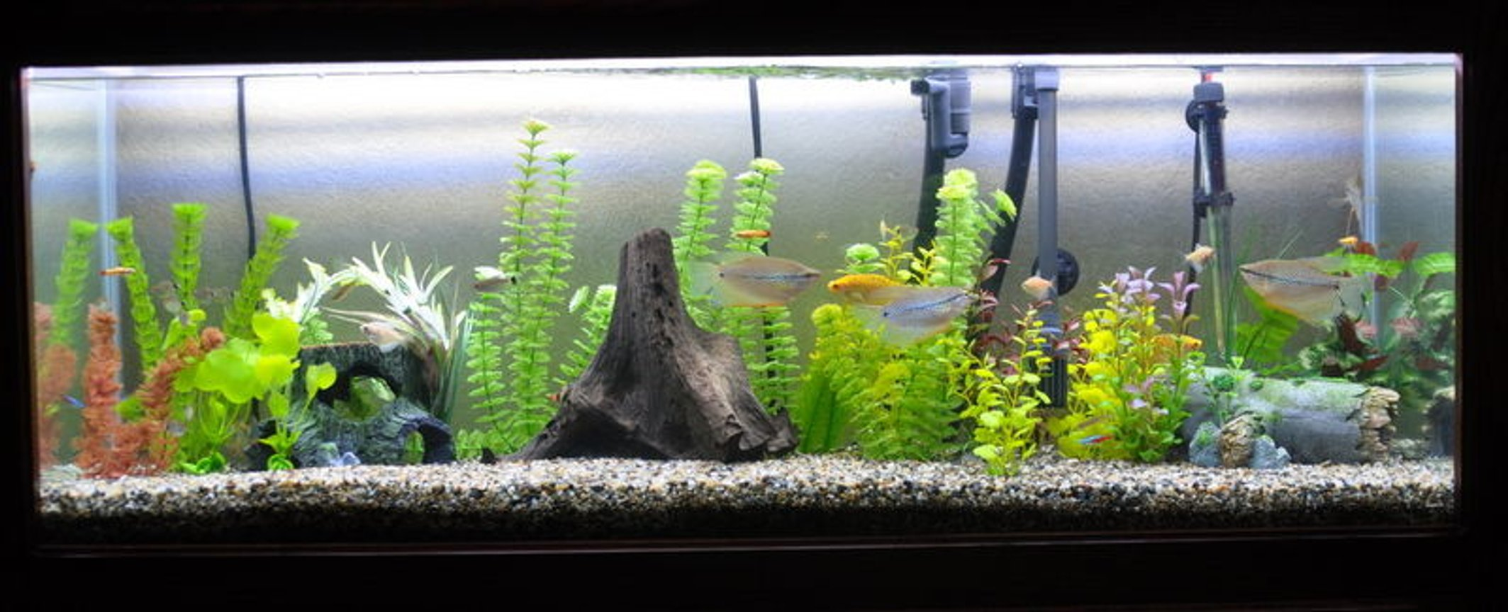 55 gallons freshwater fish tank (mostly fish and non-living decorations) - 55 gallon freshwater aquarium.