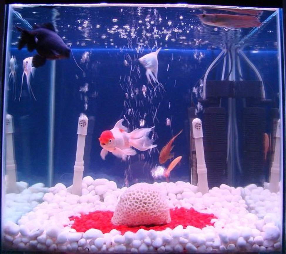 34 gallons freshwater fish tank (mostly fish and non-living decorations) - 34 Gallon Freshwater Tank