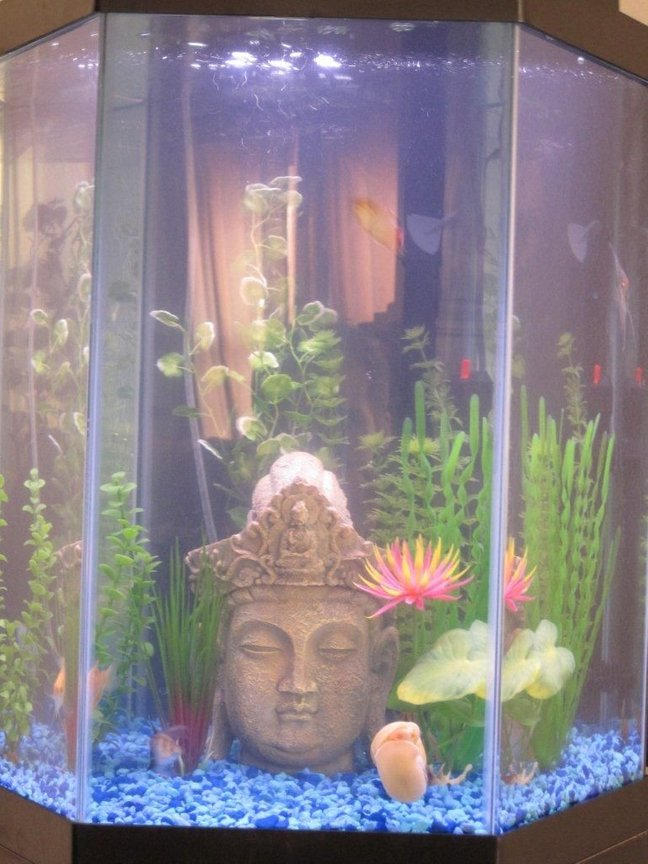20 gallons freshwater fish tank (mostly fish and non-living decorations) - 20 Gallon Community Tank