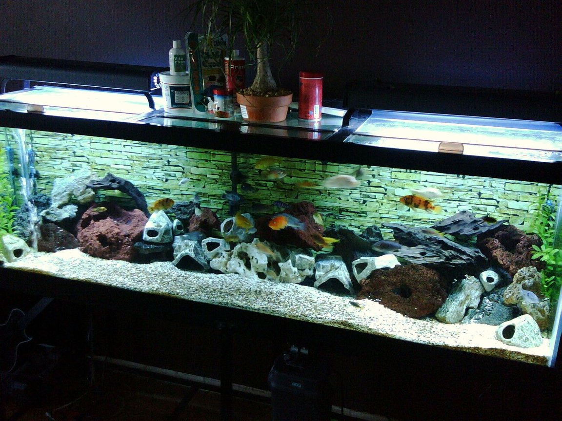 125 gallons freshwater fish tank (mostly fish and non-living decorations) - 125 Gallon Cichlid Tank. Two months old and still under construction.