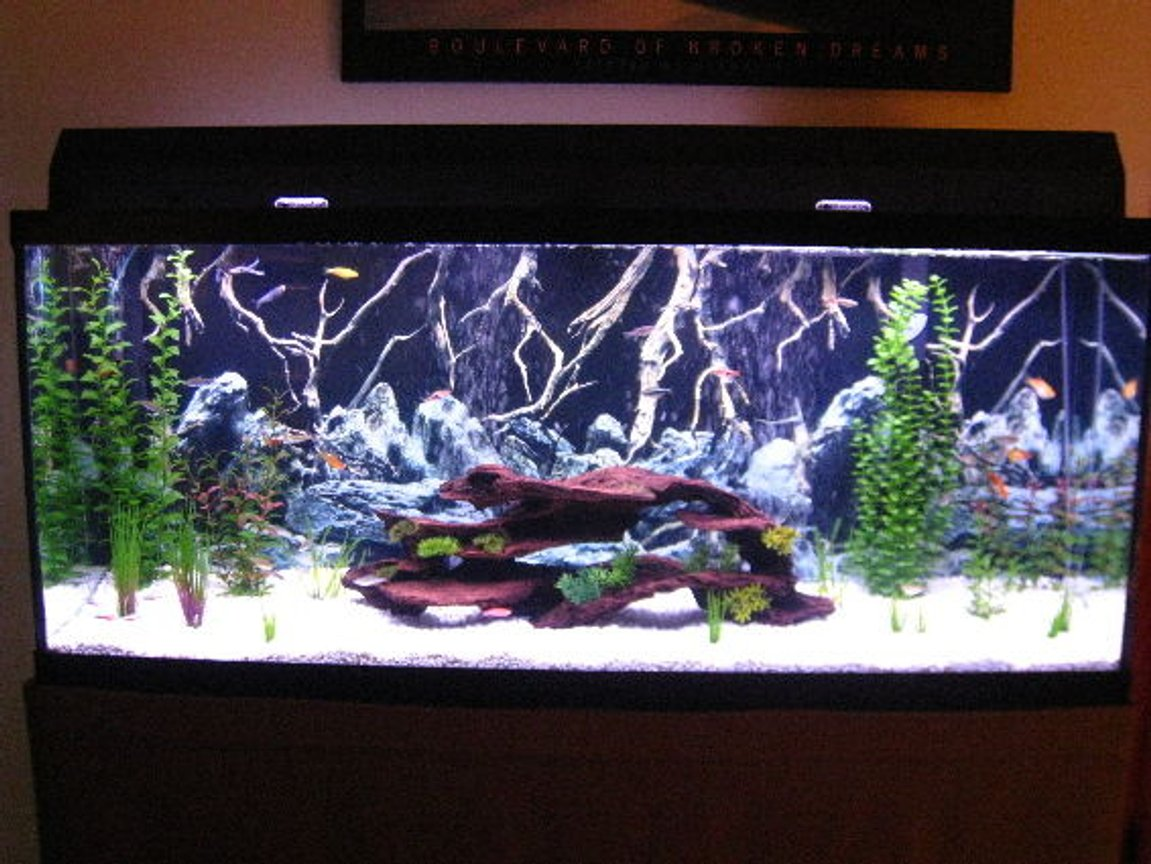 55 gallons freshwater fish tank (mostly fish and non-living decorations) - Updated Fresh 55 Community. More to come.