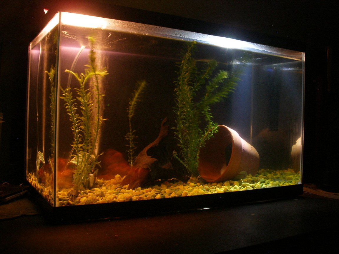 10 gallons freshwater fish tank (mostly fish and non-living decorations) - 10 gallon fish tank at night.