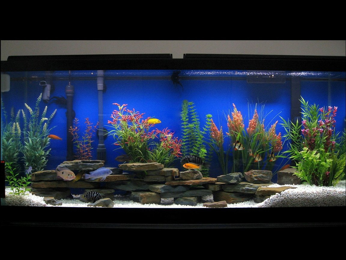 75 gallons freshwater fish tank (mostly fish and non-living decorations) - 55 Gallon Assorted Cichlids