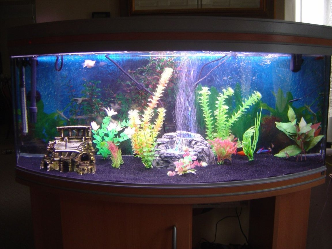 32 gallons freshwater fish tank (mostly fish and non-living decorations) - Main pic from the front, (recently cleaned :))