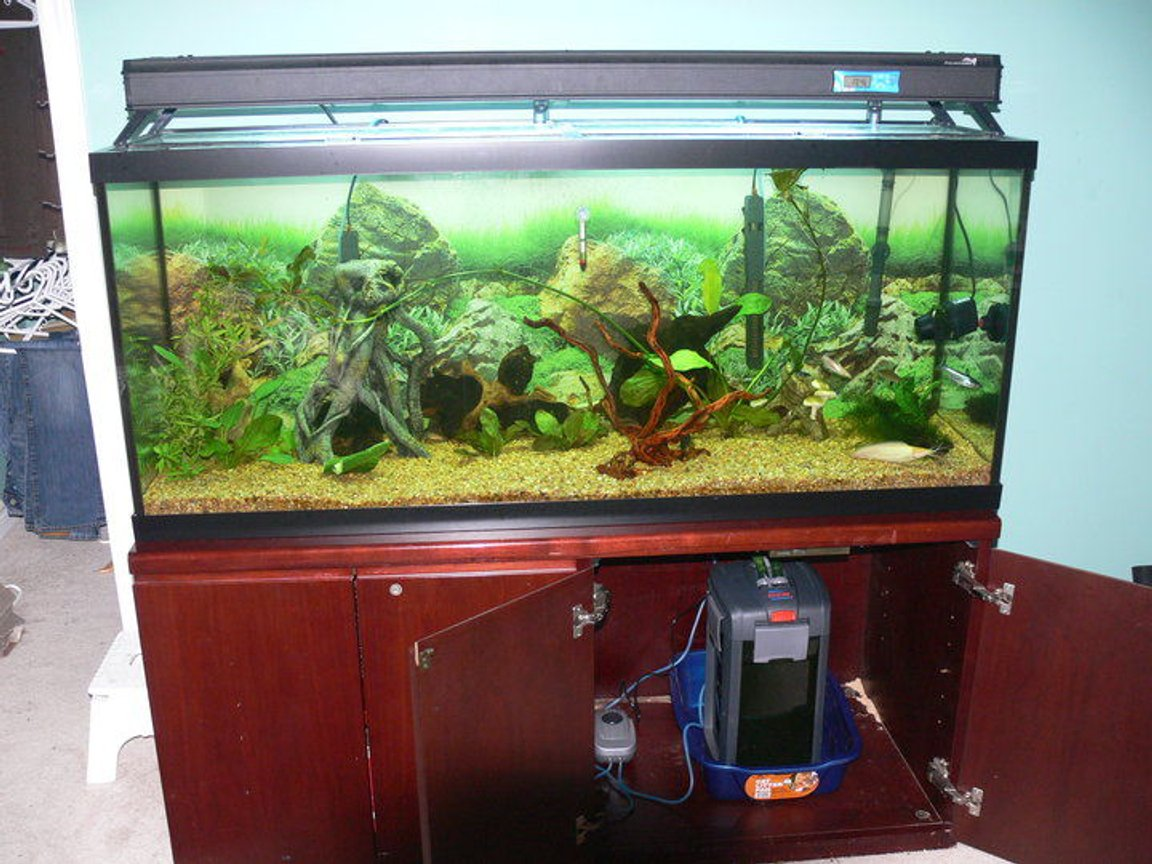 1200 gallons freshwater fish tank (mostly fish and non-living decorations) - the 120 gallon