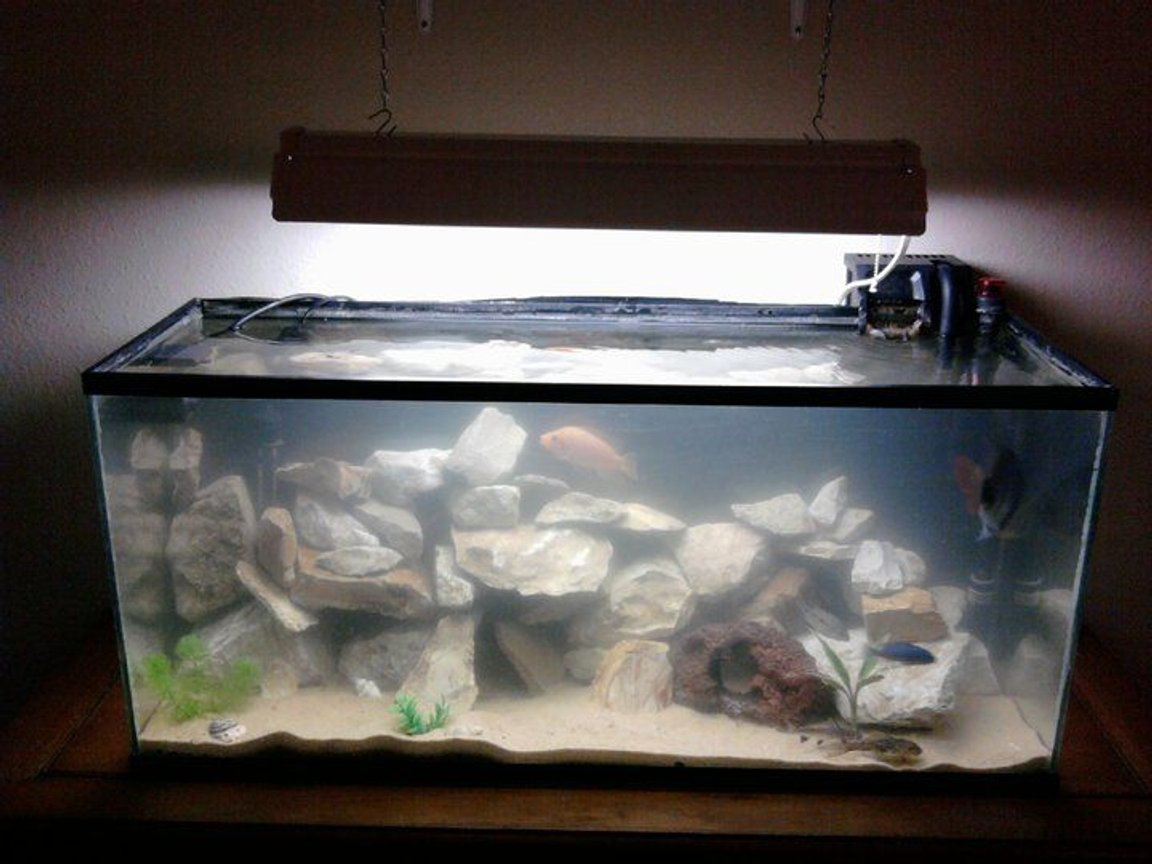 40 gallons freshwater fish tank (mostly fish and non-living decorations) - My 40 gallon cichlid biotope aquarium. Very dirty, just did partial water change and stirred up a lot of substrate.